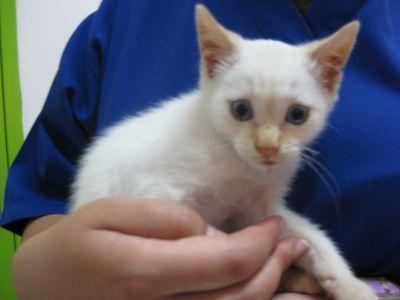 Anti-inflamatórios em gatos